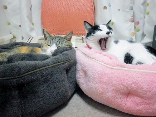 みくくぅカゴ寝