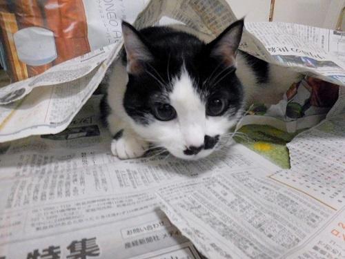 くぅと新聞紙