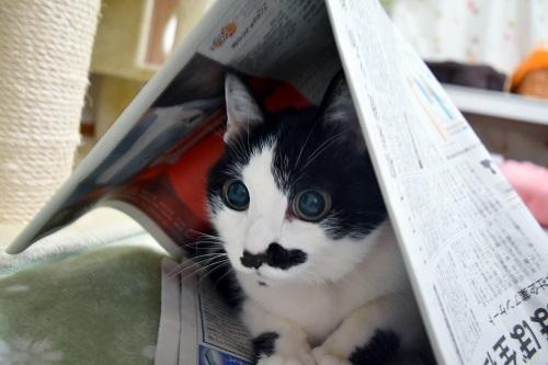 くぅ新聞紙でテント