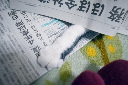 くぅ新聞からおてて