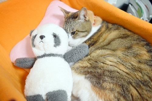 みくパンダさんと