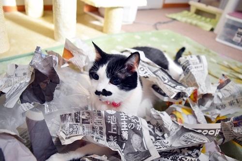 くぅ新聞紙巣