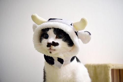 くぅ牛さん02
