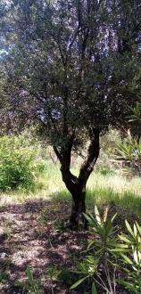 B125-truffe (4)