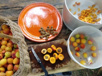 B129-abricot (5)