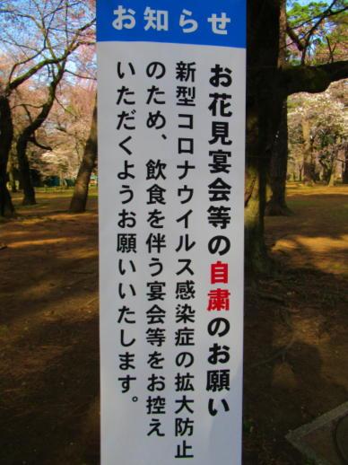 203  お花見自粛(1)