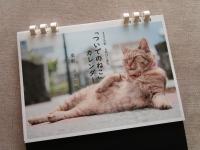 川上信也 写真家 カレンダー ついでのねこ