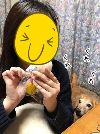 kinako19041.jpeg