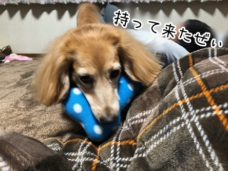 kinako19049.jpeg