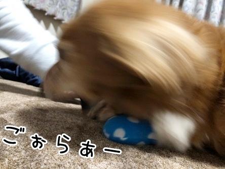 kinako19051.jpeg