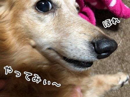 kinako19058.jpeg