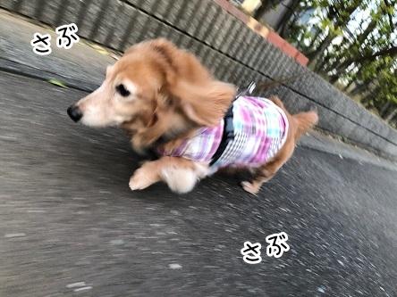 kinako19059.jpeg