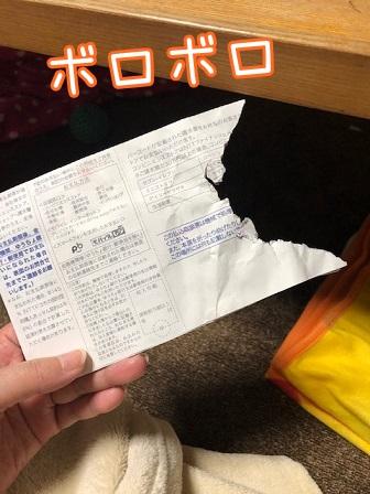 kinako19083.jpeg