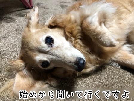 kinako19099.jpeg