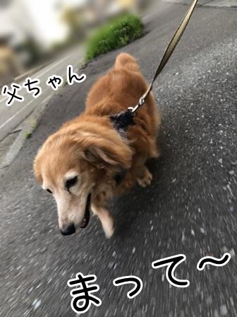 kinako19216.jpeg