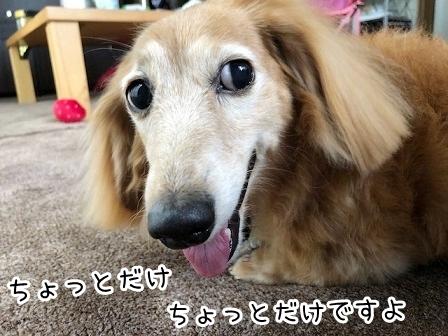kinako19295.jpeg