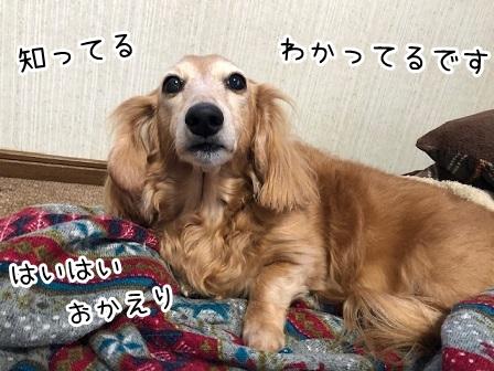 kinako19339.jpeg