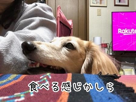 kinako20125.jpeg