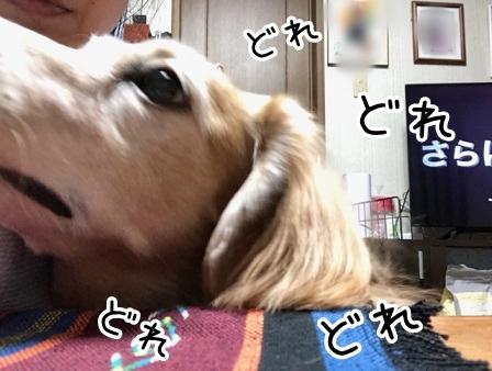 kinako20126.jpeg