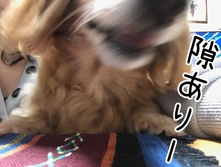 kinako20127.jpeg