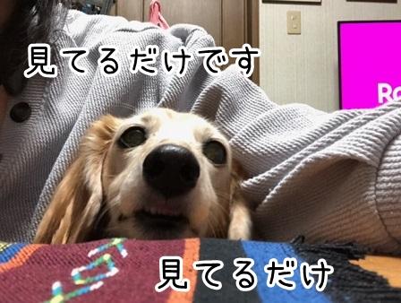 kinako20128.jpeg