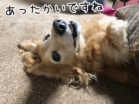 kinako20133.jpeg