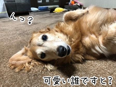 kinako20155.jpeg