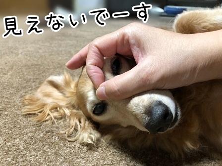 kinako20157.jpeg