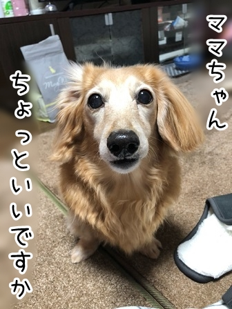 kinako20216.jpeg