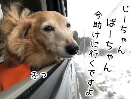 kinako20404.jpeg