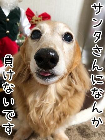 kinako20415.jpeg
