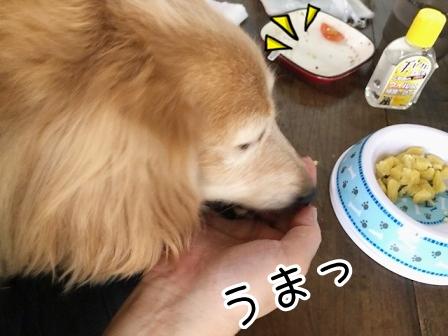 kinako20424.jpeg