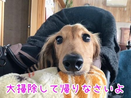 kinako20427.jpeg