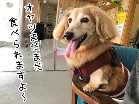kinako20428.jpeg