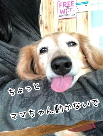 kinako20429.jpeg