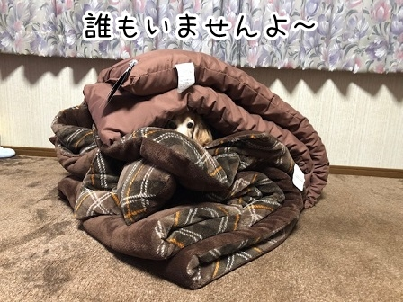 kinako20433.jpeg