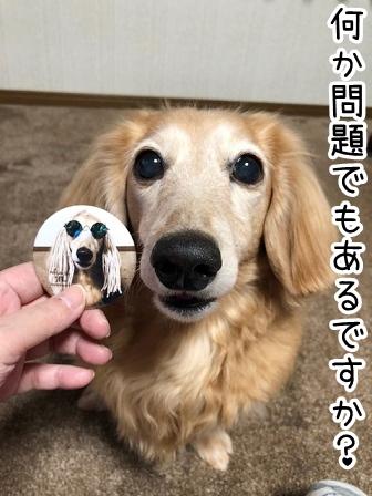 kinako20436.jpeg