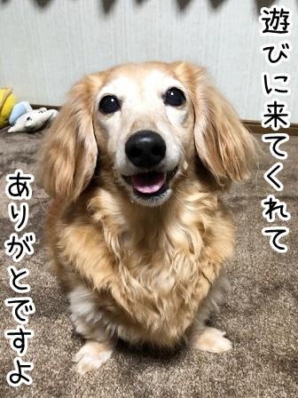 kinako20438.jpeg