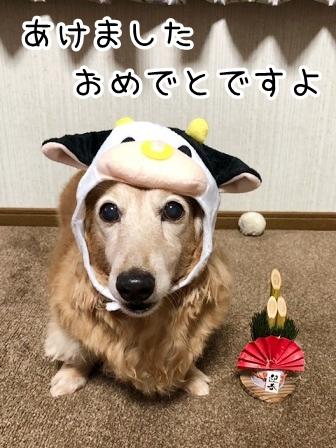 kinako20439.jpeg