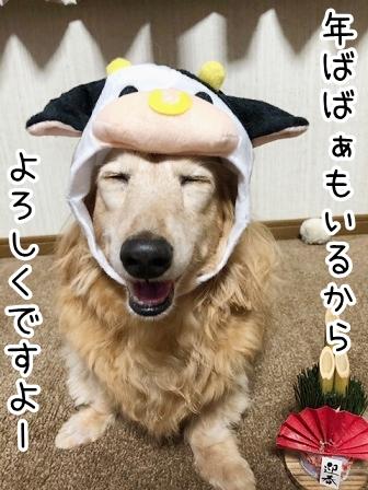 kinako20441.jpeg