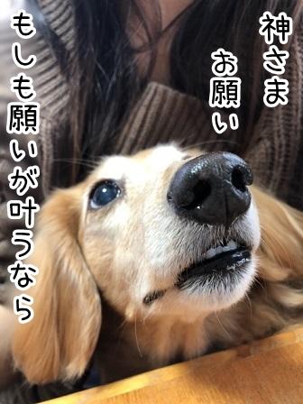 kinako20446.jpeg