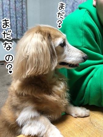 kinako20455.jpeg