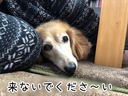 kinako20464.jpeg