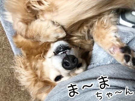 kinako20472.jpeg