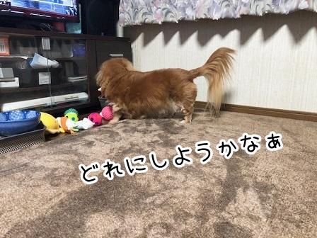 kinako20478.jpeg