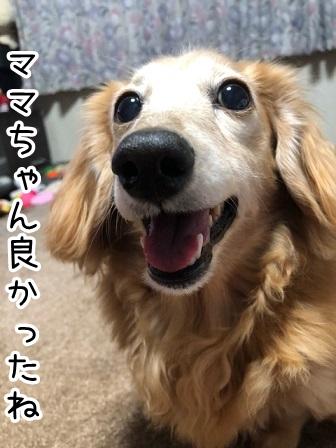 kinako20495.jpeg
