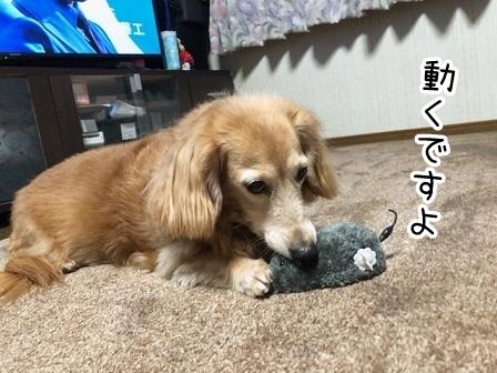 kinako20499.jpeg