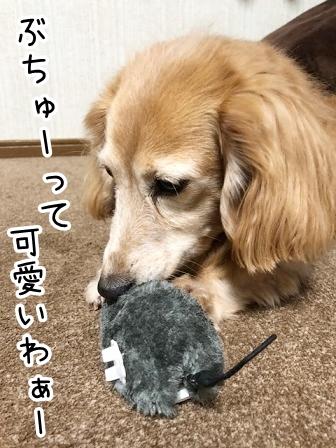 kinako20502.jpeg