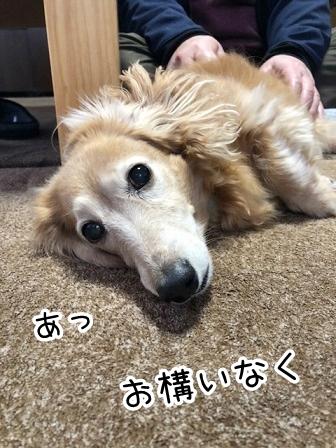 kinako20507.jpeg