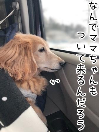 kinako20509.jpeg